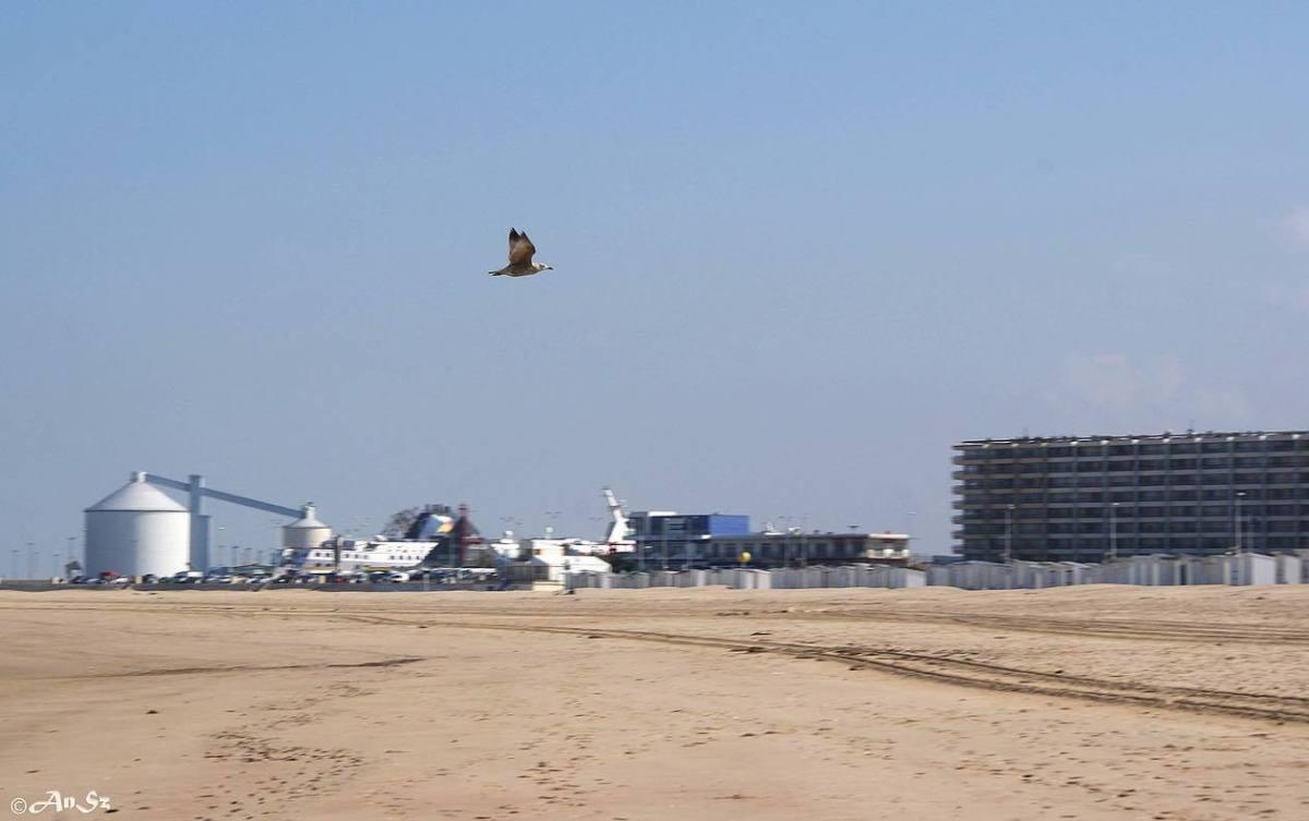Calais 4 - the beach