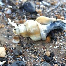 Snail cemetery