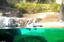 Washington zoo